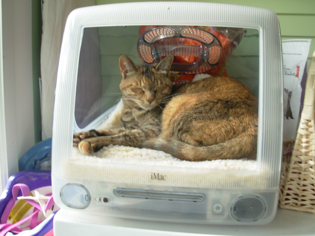Bailey was the tortoise-shell tabby we brought home from Japan with us. She passes away last year. Bye Bailey.