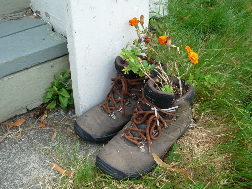 Here's something you can do with your old boots. If you buy a new pair every year, soon your garden will be full of boots!
