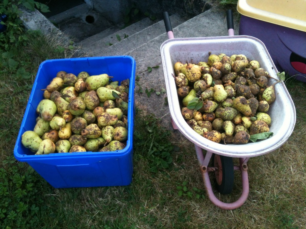 One of these tubs of fruit is in the compost now.